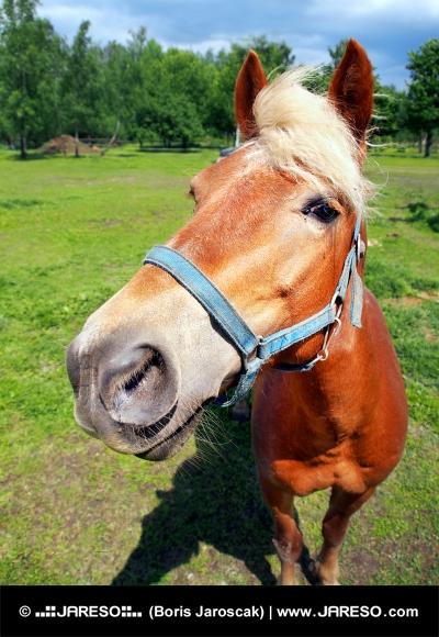 Horse гледа директно в камерата