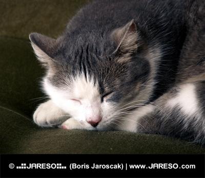 Спящата котка