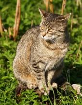 Седейки котка