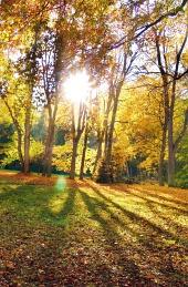 Лъчи на слънцето и дърветата през есента
