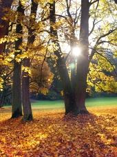 Слънцето и дървета през есента