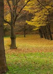 Парк през есента с листа под дърветата