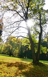 Слънцето и дървета през лятото