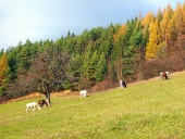 Коне на паша през есента поле