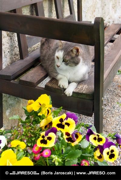 Kat hvilende på træbænk