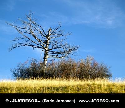 Lone tørt træ