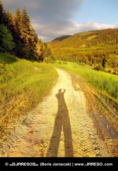 Road ved solnedgang med lang skygge