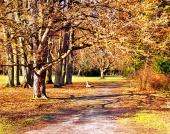 Farverige park i efteråret