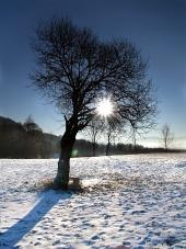 Søn skjult i toppen af træet i løbet af vinteren dag