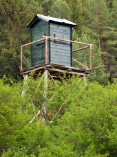 Watch tårn i dybe skov