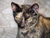Portræt af en broget omstrejfende kat