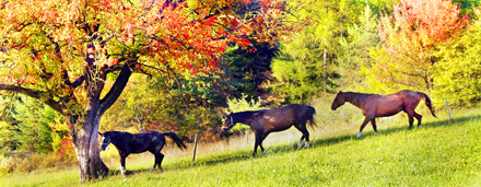 Hand ausgewählt Katalog mit Fotos von Wild-oder Haustieren, wie Bilder von Pferden, Kühen, Katzen, Hunde, oder Bilder von Insekten.