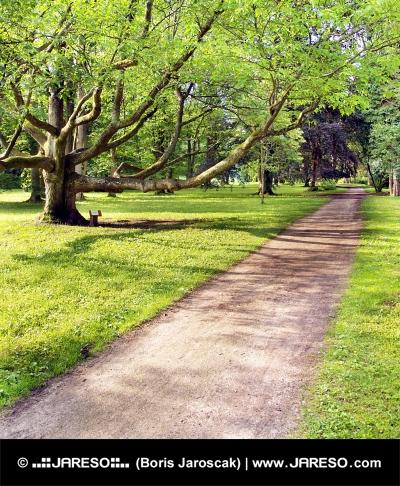 Park und sehr alter Baum