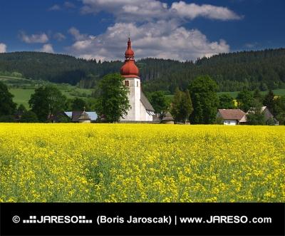 Gelbes Feld und alten Kirche in Liptovske Matiasovce, Slowakei
