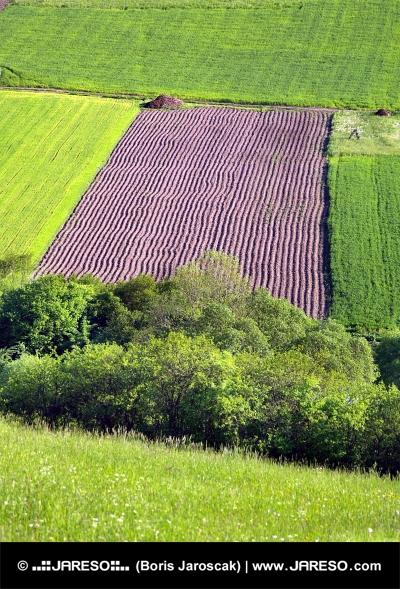 Grüne Wiese und Feld