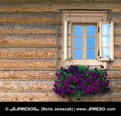 Fenster-und Blumen
