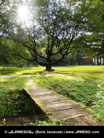 Sonnenschein und massiven Baum