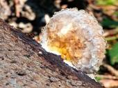 Ein Holzfäule mit Feuchtigkeit bedeckt