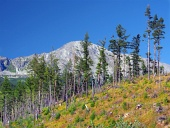 Beschädigte Wald in Hohe Tatra