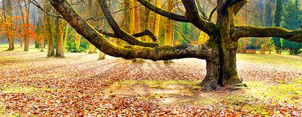 Seleccionado Mano catálogo con fotos de paisajes, vistas y paisajes naturales.