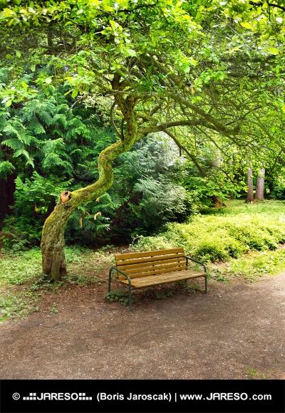 Banco bajo árbol en el parque