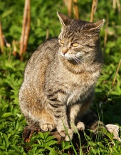 Sentado cat