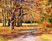 Parque colorido en otoño
