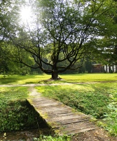 Sunshine y enorme árbol