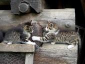 Los gatitos que juegan en la madera apilada