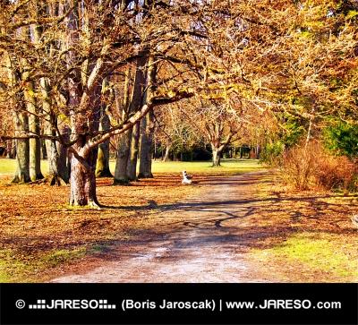 Parc coloré à l'automne