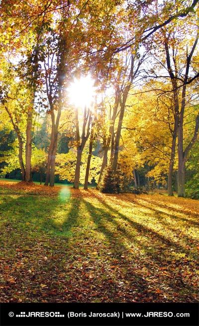 Les rayons du soleil et des arbres à l'automne