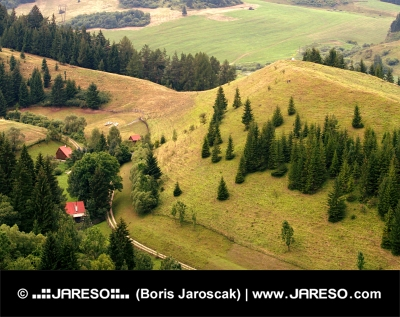 Maisons solitaires dans la forêt