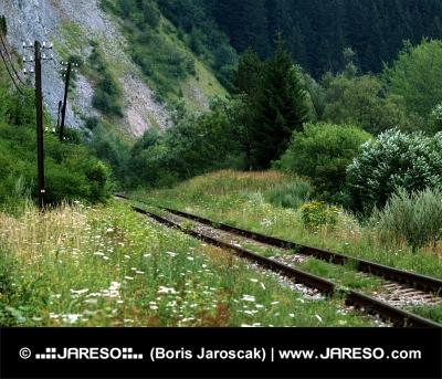 Vieux chemin de fer dans un paysage vert