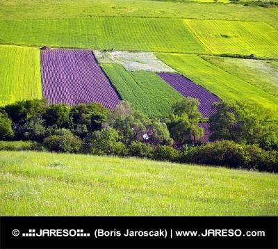 Prés et champs verts