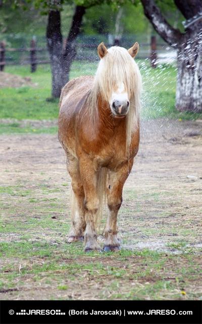Poney avec de longs cheveux