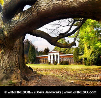 Arbre énorme et arboretum dans Turcianska Stiavnicka, Slovaquie