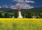 Champ jaune et ancienne église en Liptovske Matiasovce, Slovaquie