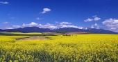 Champ jaune et les montagnes de Rohace, Slovaquie