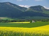 Les champs et l'église de Saint Ladislav