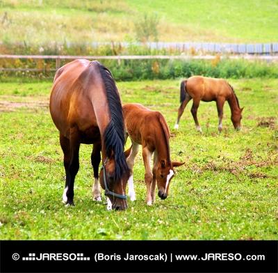 उसके युवा foals साथ घोड़ी