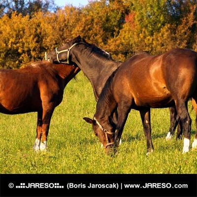 घोड़ों के बीच दोस्ती