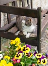 लकड़ी के बेंच पर बिल्ली विश्राम