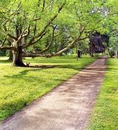 पार्क और बहुत पुराना पेड़