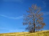 नीले रंग की पृष्ठभूमि पर एकल पत्तेदार पेड़