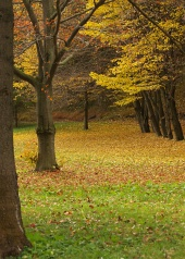 पेड़ के नीचे पत्तों के साथ शरद ऋतु में पार्क