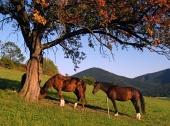 लाल पेड़ के नीचे घोड़े