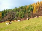 शरद ऋतु क्षेत्र में चराई घोड़े