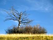 Magányos, kiszáradt fa