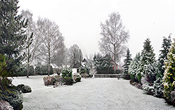 Winter panorama of our garden from Tuesday of this week