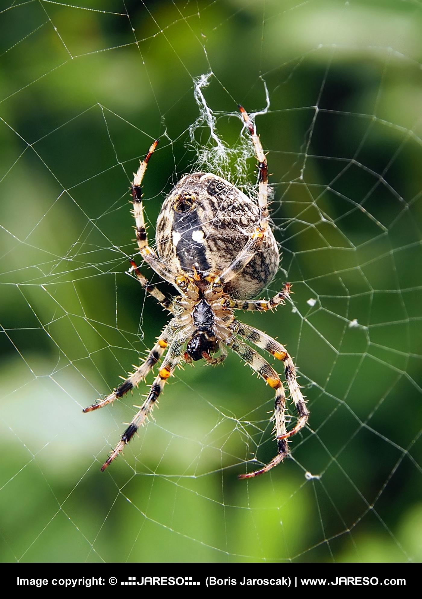 web_gplus_fb_insect_spider_net_green_summer_p9070165xp9070166_3.jpg